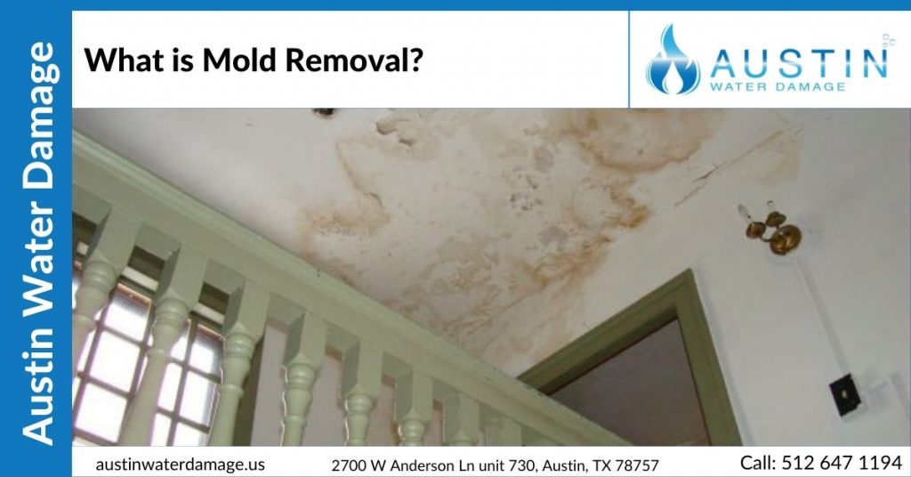 what-is-mold-removal-blog