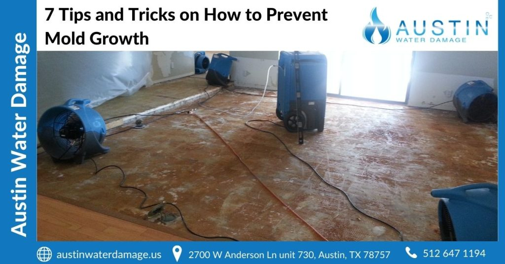 7 Tips and Tricks on How to Prevent Mold Growth