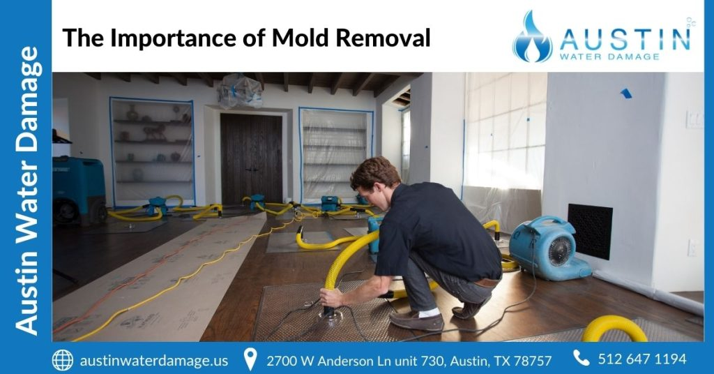 The Importance of Mold Removal